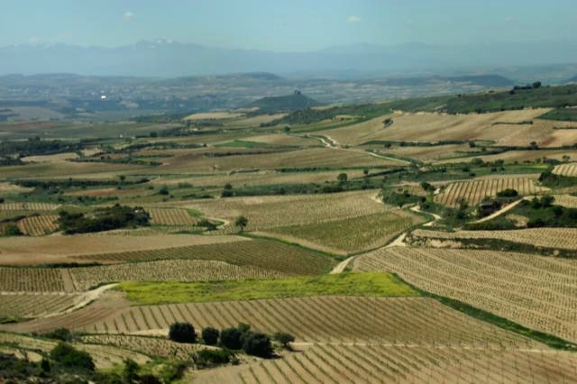Winnice w Rioja